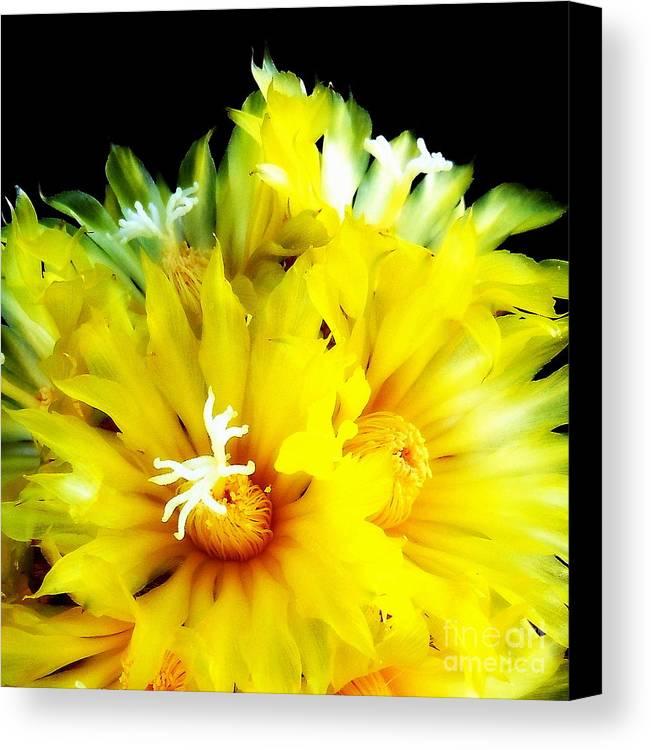 Flower Canvas Print featuring the photograph Fleurs De Cactus 2 by Pruddygurl Exclusives