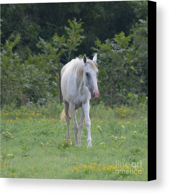 White Horse Prints Canvas Print featuring the photograph Hello by Ruth Housley