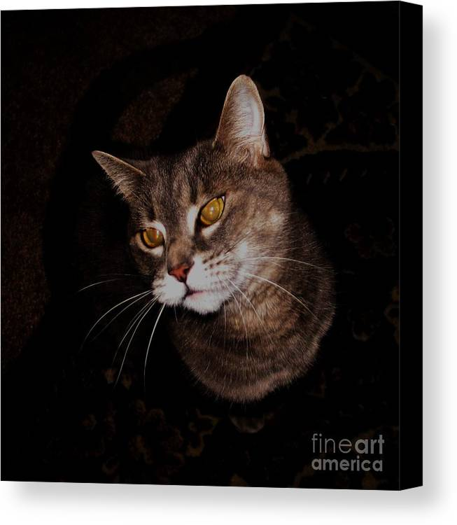 Photography Canvas Print featuring the photograph Long Whiskers by Theresa Davis
