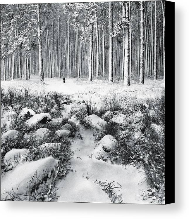 Landscape Canvas Print featuring the photograph Winter Is Here by Vladimir Kholostykh