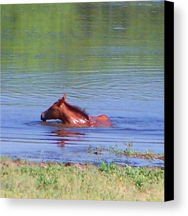 Horses Canvas Print featuring the photograph Look Mum I Can Swim. by Lilly King