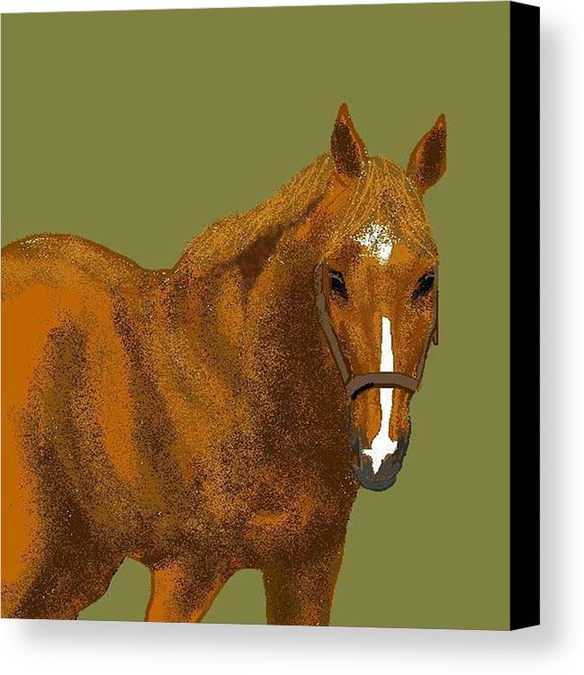 Horse Canvas Print featuring the digital art Young Duke by Carole Boyd