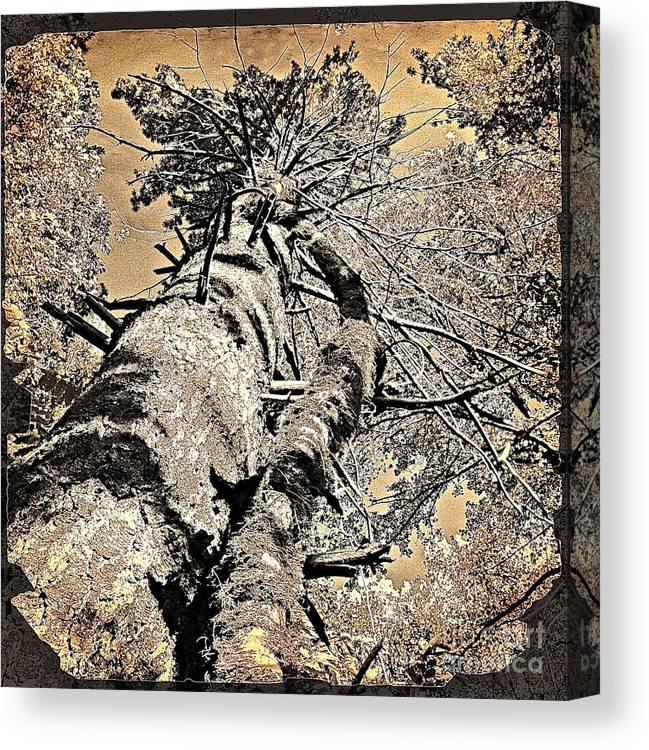 Trees Prints Canvas Print featuring the digital art Symbiosys by Delona Seserman
