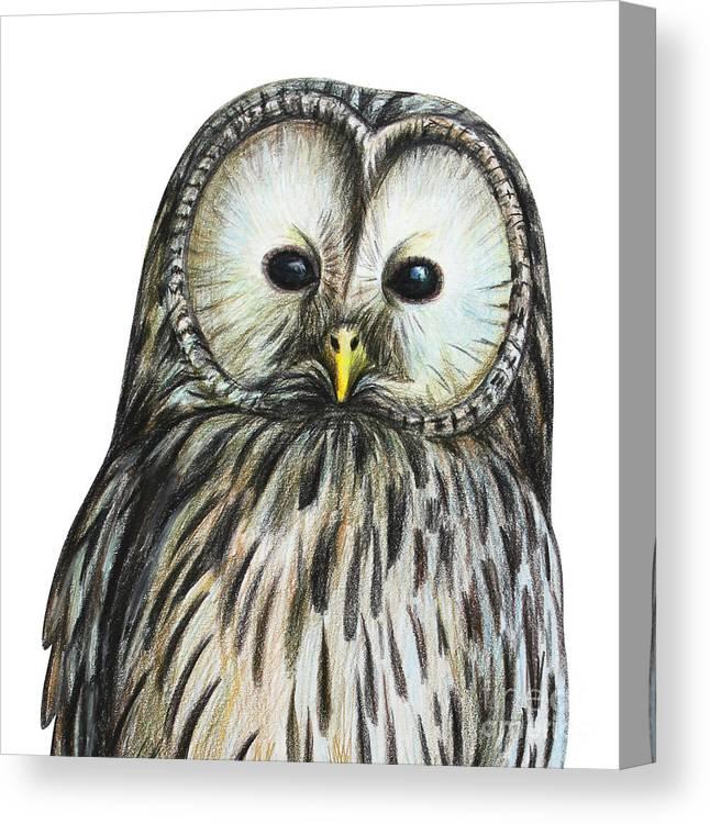 Owl Portrait Illustration Drawing Canvas Print featuring the digital art Gray Owl Portrait Drawing by Viktoriya art
