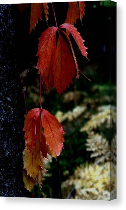 Fall Canvas Print featuring the photograph Autumn by Alfredo Martinez