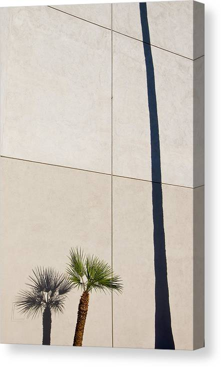 Palm Tree Canvas Print featuring the photograph Palm Tree And Shadows by Rich Iwasaki
