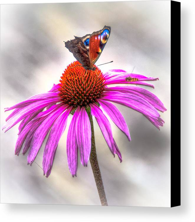 Butterfly Canvas Print featuring the photograph My Flower by Alex Hiemstra