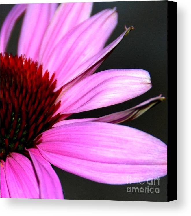 Canvas Print featuring the photograph After The Bloom by Christy Phillips