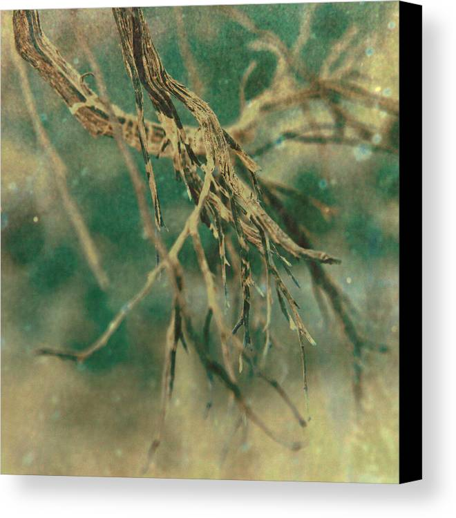 Tree Canvas Print featuring the photograph Organic by Mark Ross