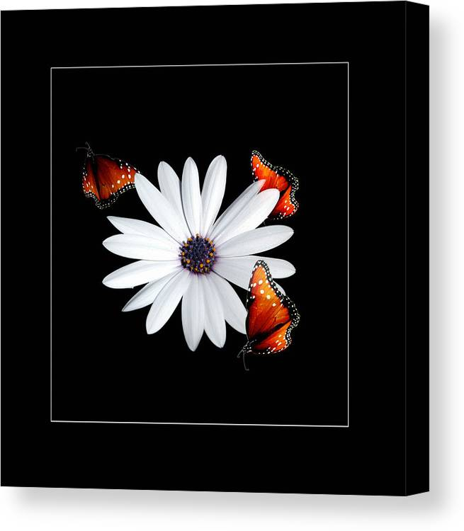 Flower Canvas Print featuring the photograph Attraction by Richard Gordon