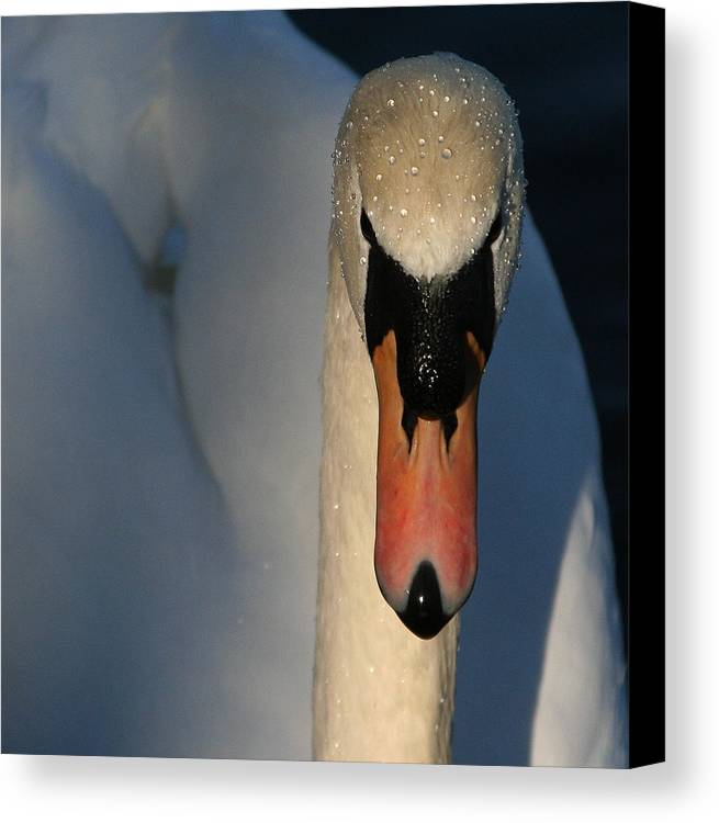 Swan Canvas Print featuring the photograph Brooklyn Swan by Jason Hochman