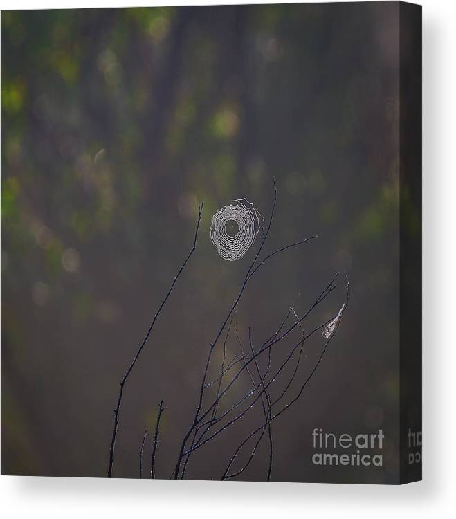 The Little Things Canvas Print featuring the photograph The Little Things by Mitch Shindelbower