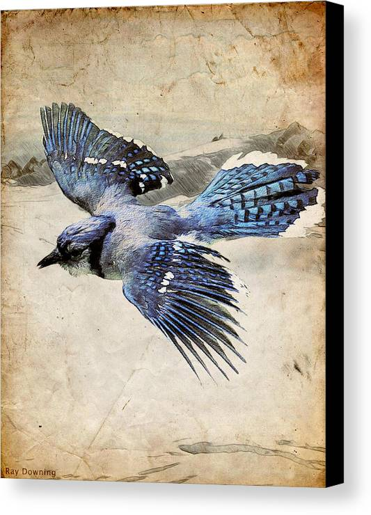 Blue Jay Canvas Print featuring the digital art Blue Jay In Flight by Ray Downing