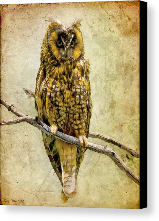 Owl Canvas Print featuring the digital art Long Eared Owl by Ray Downing