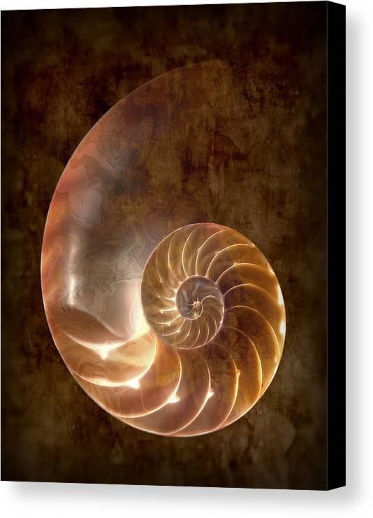 Nautilus Canvas Print featuring the photograph Nautilus by Tom Mc Nemar
