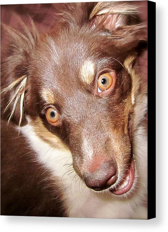 Talking Dog Canvas Print featuring the photograph Talking Dog by Gwyn Newcombe