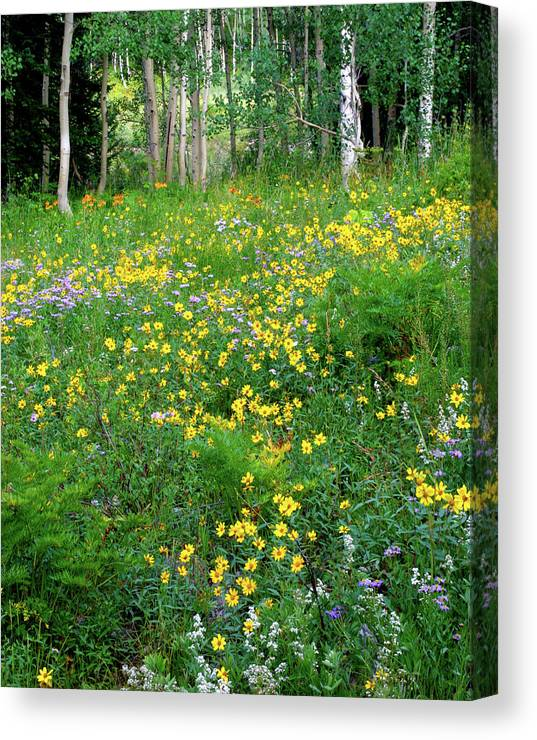 Abundance Canvas Print featuring the photograph Sunflower Meadow by Crystal Garner