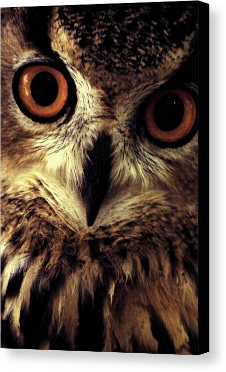 Owl Canvas Print featuring the photograph Hoot Owl by Alfredo Martinez
