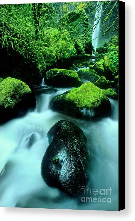 Dave Welling Canvas Print featuring the photograph Elowah Falls Columbia River Gorge National Scenic Area Oregon by Dave Welling