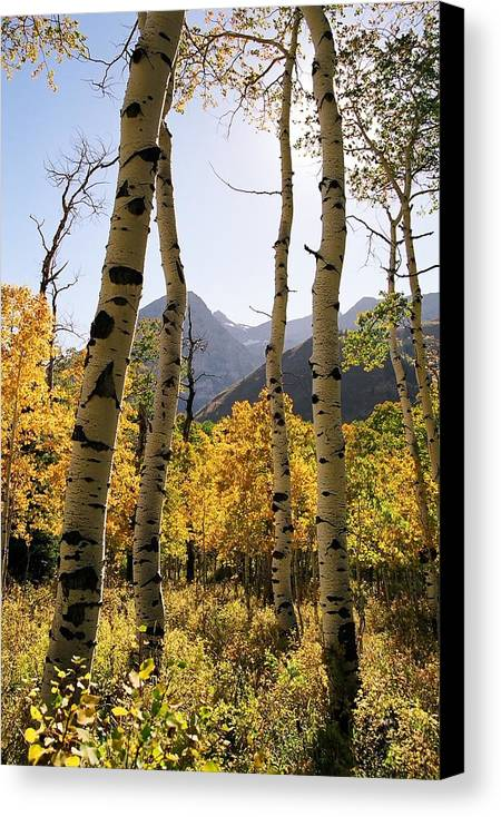 Trees Canvas Print featuring the photograph 4 Aspens by Caroline Clark