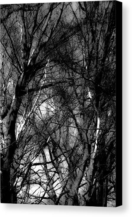 Black & White Canvas Print featuring the photograph Bare Trees II by Donna Fonseca Newton