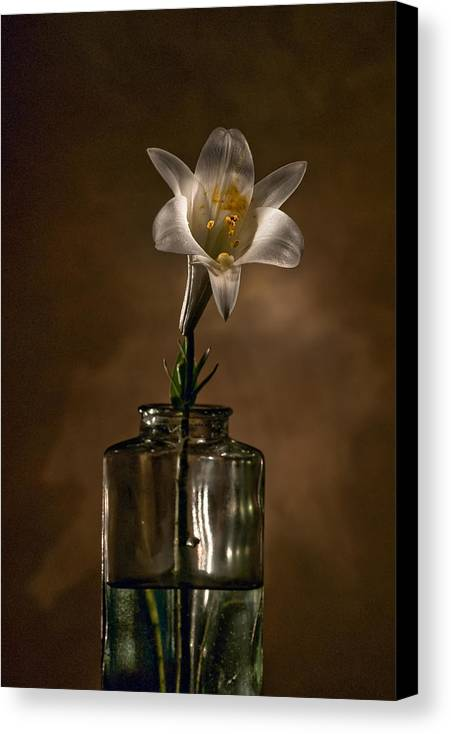 Flower Canvas Print featuring the photograph Flashlight Series Easter Lily 3 by Lou Novick
