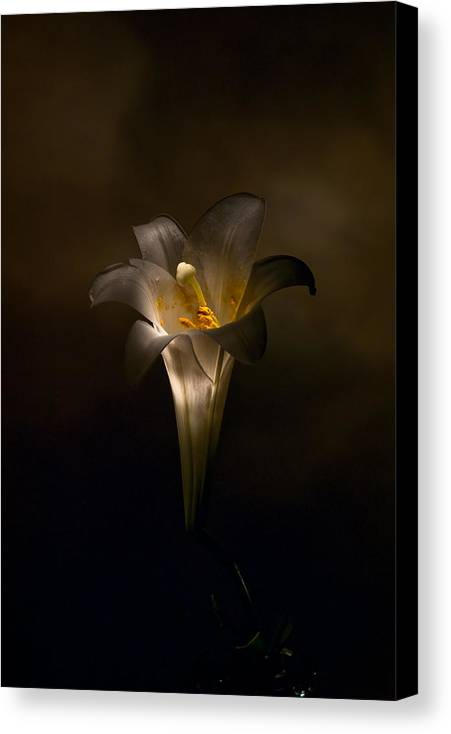 Flower Canvas Print featuring the photograph Flashlight Series Easter Lily 5 by Lou Novick