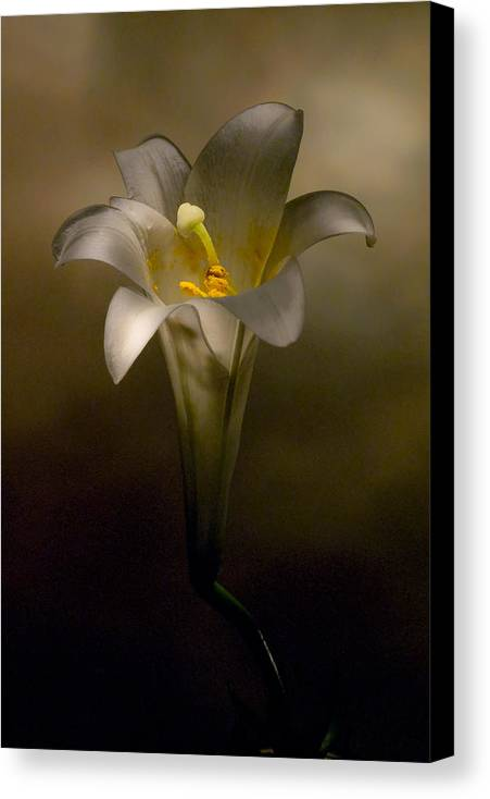 Flower Canvas Print featuring the photograph Flashlight Series Easter Lily 7 by Lou Novick
