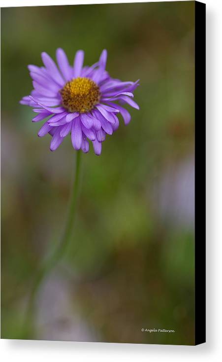 Flower Canvas Print featuring the photograph Purple Aster by Angela Patterson