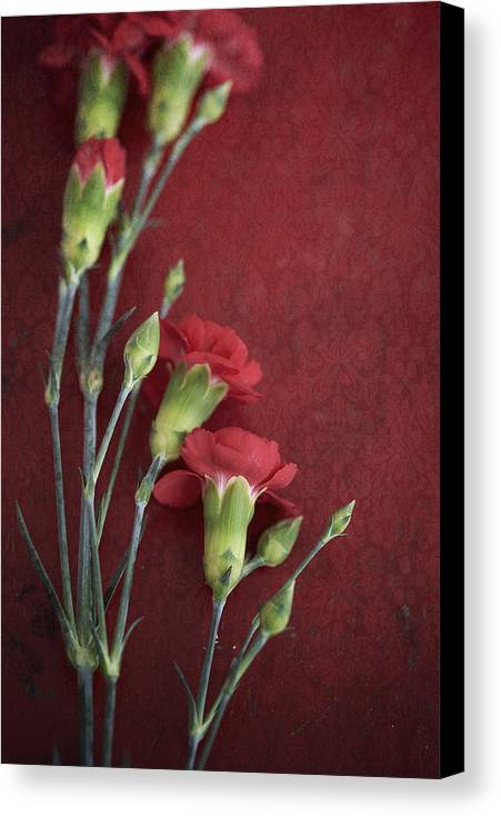 Flowers Canvas Print featuring the photograph Red Carnation Stems by Di Kerpan