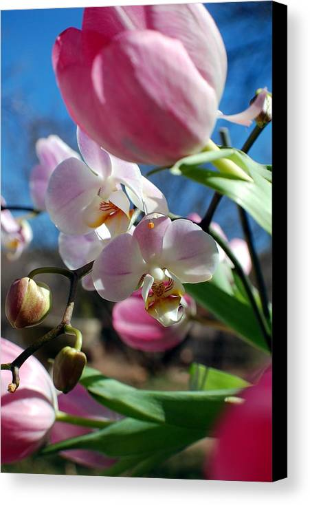 Flowers Canvas Print featuring the photograph Synthesis by Heather S Huston