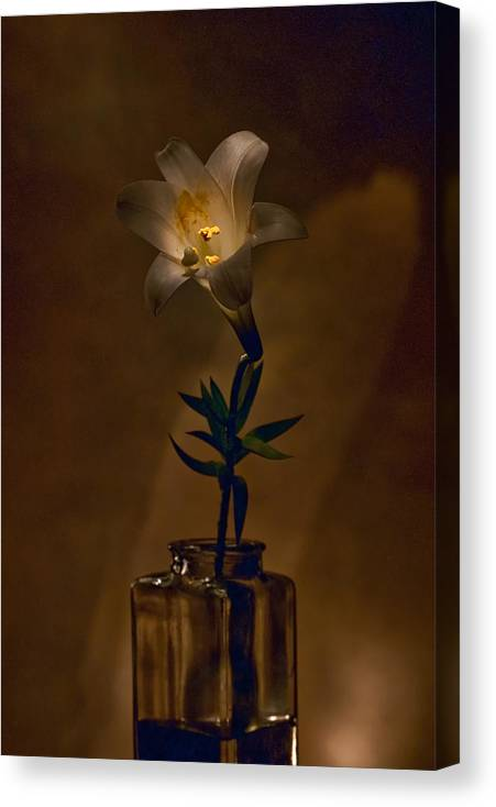 Flower Canvas Print featuring the photograph Flashlight Series Easter Lily 4 by Lou Novick