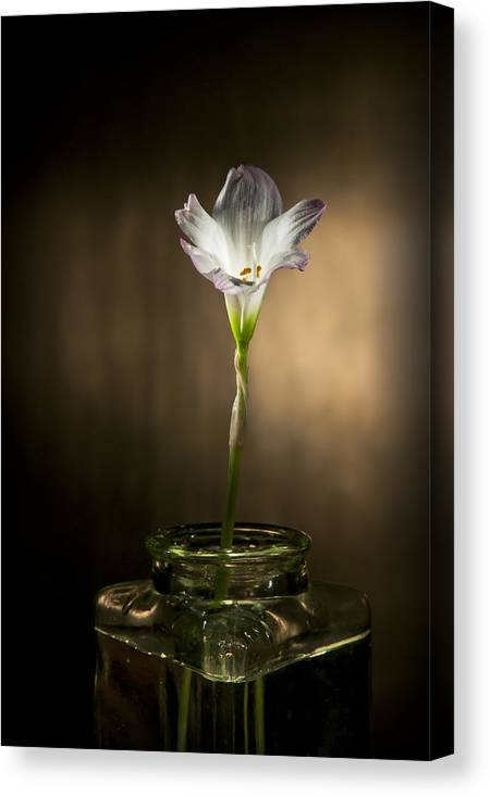 �2010 Lou Novick Canvas Print featuring the photograph Flashlight Series White Flower 1 by Lou Novick