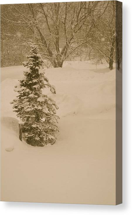 Snow Maine Colorado Christmas Nature Sepia Tone Canvas Print featuring the photograph Maine Snowy Day by Sheila Price