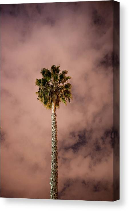 Palm Tree Canvas Print featuring the photograph Palm Tree At Night by Rich Iwasaki