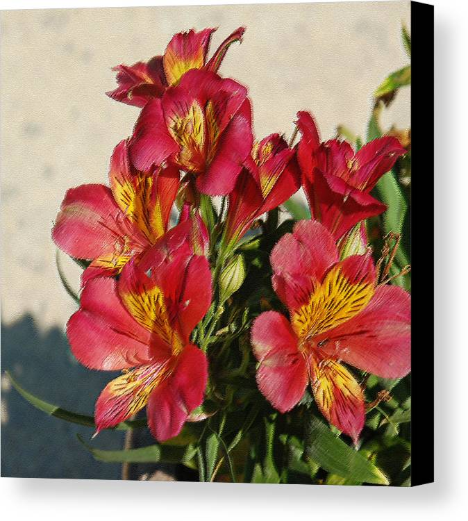 Alstroemeria Canvas Print featuring the photograph Alstroemeria In Pastel by Suzanne Gaff