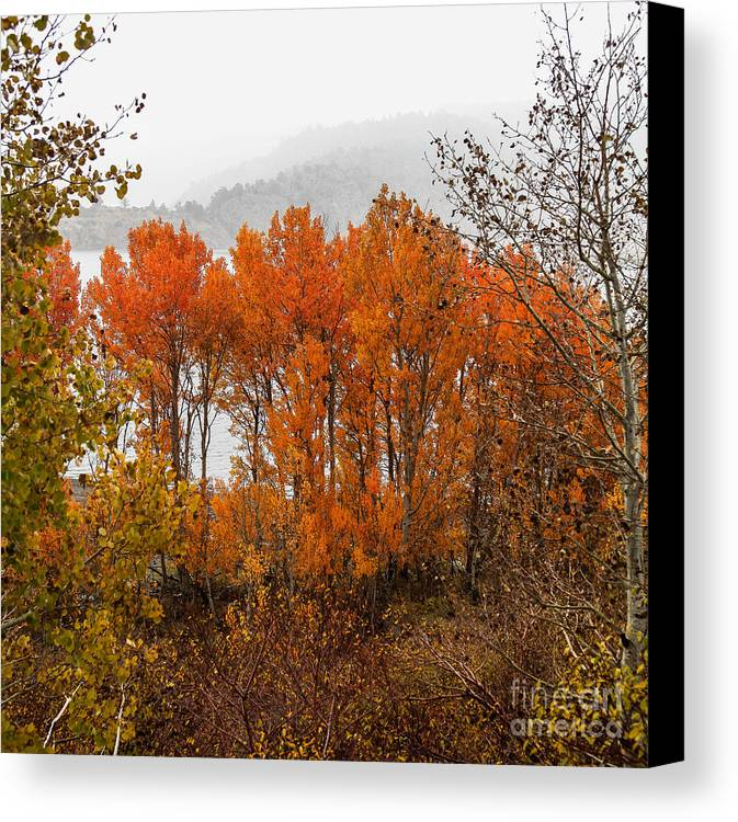 Lundy Lake Canvas Print featuring the photograph Fall Color Snow Storm by Webb Canepa