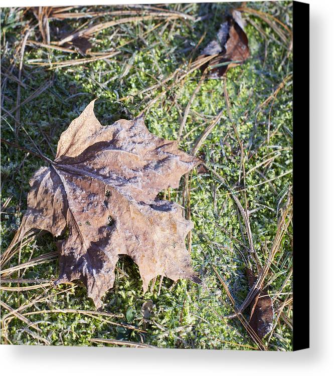 Leaf Canvas Print featuring the photograph Frost Covered Leaf by Craig Walker