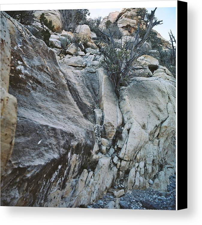 Cactus Canvas Print featuring the photograph Rocks In Desert by Larry Marano