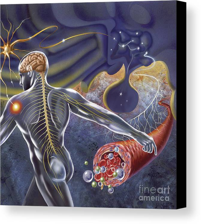 Illustration Technique Canvas Print featuring the digital art Schematic Of The Hypothalamus Receiving by TriFocal Communications