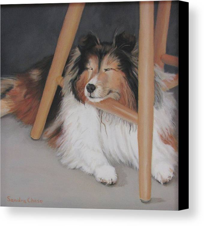 Shetland Sheepdog Canvas Print featuring the painting Teddy In My Studio by Sandra Chase
