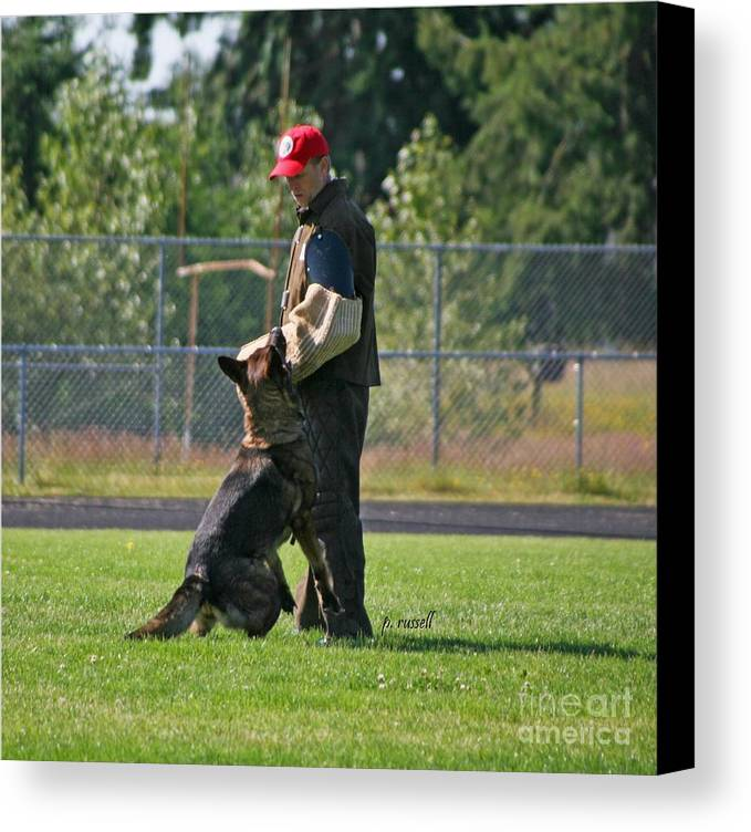 Schutzhund Canvas Print featuring the photograph P-0332 by P Russell