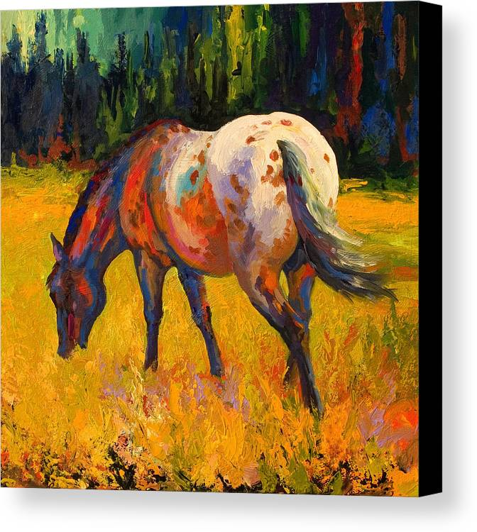 Horses Canvas Print featuring the painting Best End Of An Appy by Marion Rose