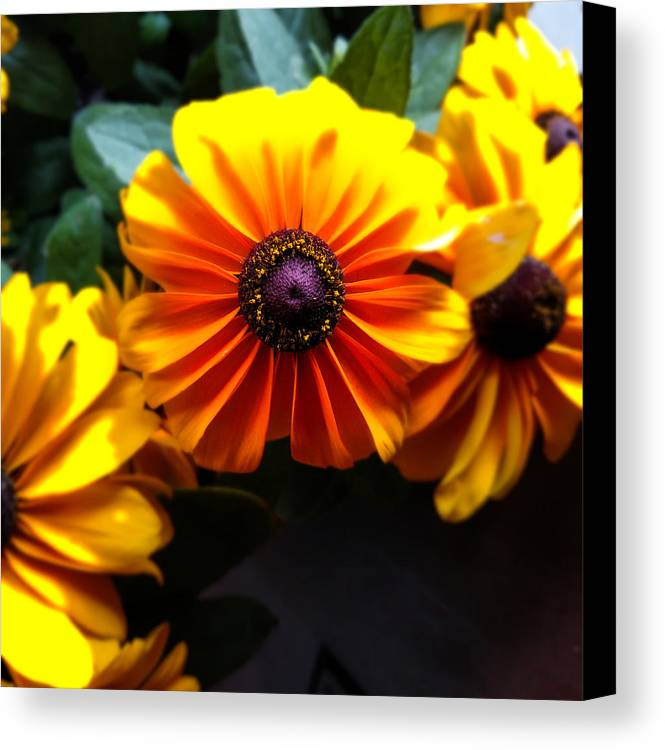 Fall Canvas Print featuring the photograph Fall Flowers by Jennifer Kohler