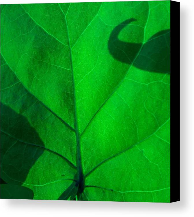 Abstract Canvas Print featuring the photograph Hooked On Green by Florene Welebny