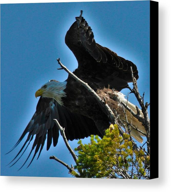 Birds Canvas Print featuring the photograph Lunch Time by Taylor Howe