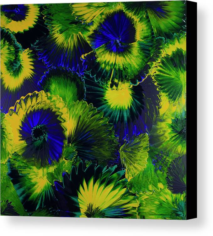 Abstract Canvas Print featuring the painting Peacocks On The Run by Tina Law