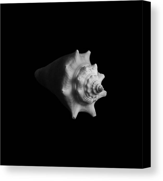 Seashell Canvas Print featuring the photograph Shell No. 4 by Henry Krauzyk
