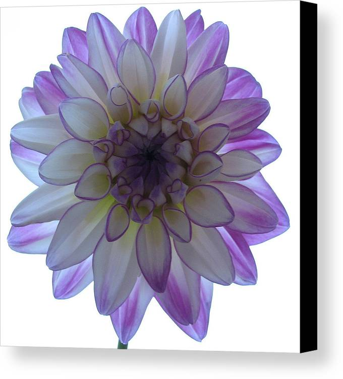Flower Canvas Print featuring the photograph Show Me Your Beauty by Kathy Roncarati
