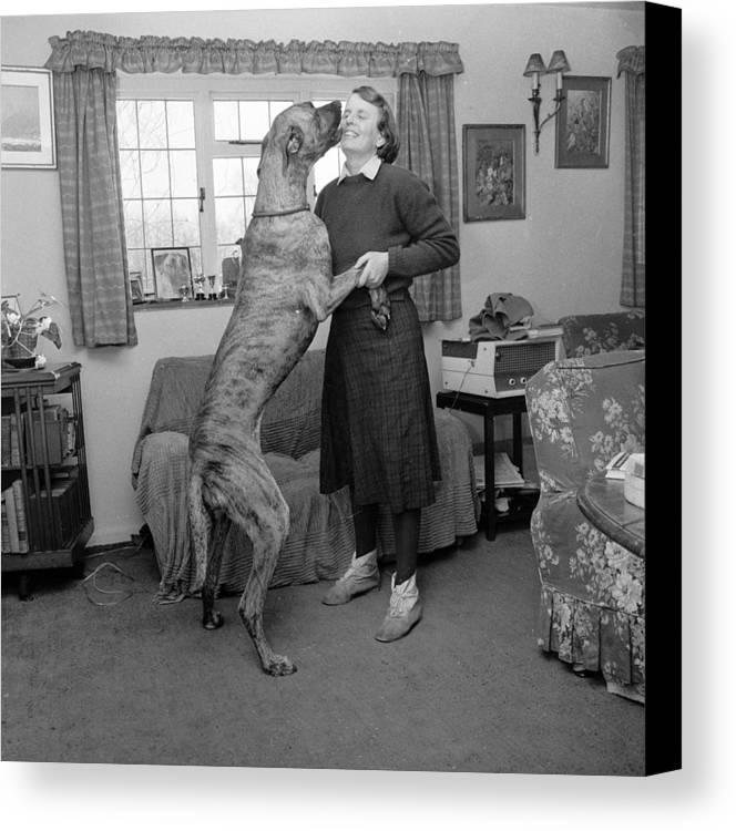 Adult Canvas Print featuring the photograph Sit! by John Drysdale